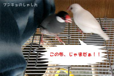 c0007055_17243482.jpg