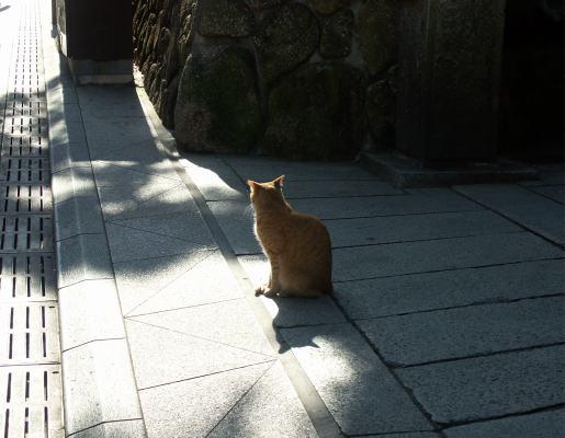 江ノ電散策_c0031975_058478.jpg