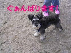 d0048951_18231659.jpg