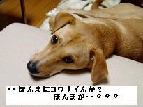 d0068000_19474910.jpg