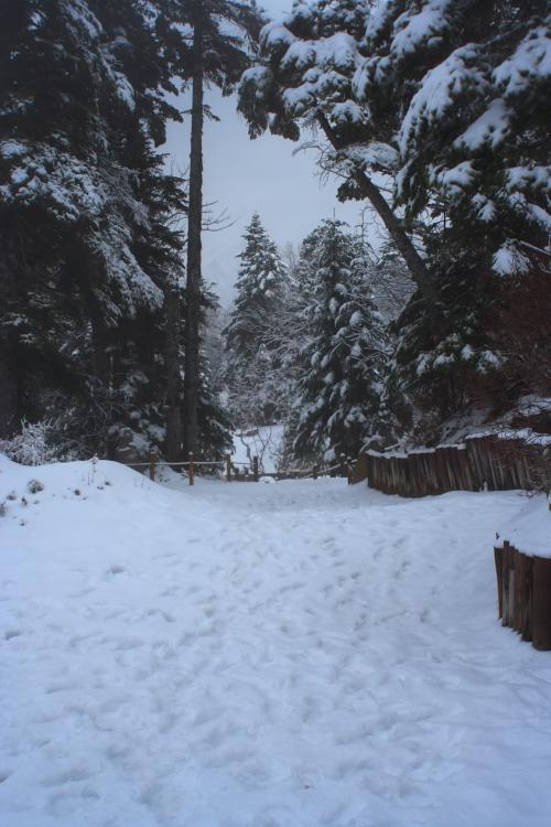 Snow Scene 05.11.14_c0030874_10115821.jpg