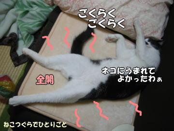 b0041182_1001662.jpg