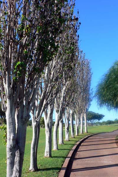 Kapolei Golf Course_a0049092_14443248.jpg