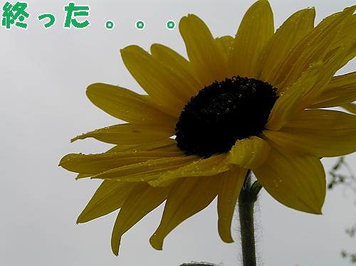 b0067012_23463825.jpg