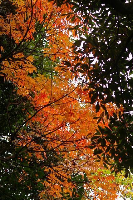 尾山神社の神門_d0043136_21371754.jpg