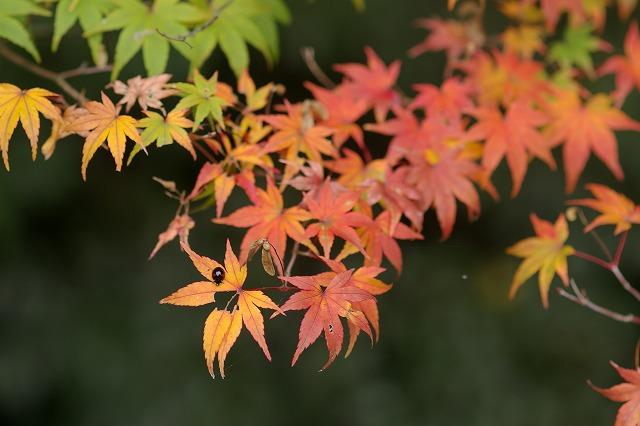尾山神社の神門_d0043136_21523452.jpg