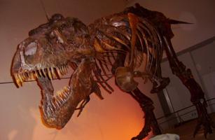 恐竜博に行ってきました_c0073813_2371554.jpg