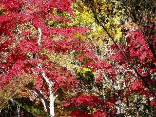 もみじ谷公園(2005・11・12土曜日)_c0074574_1123284.jpg