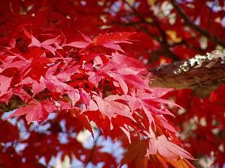 もみじ谷公園(2005・11・12土曜日)_c0074574_11251912.jpg