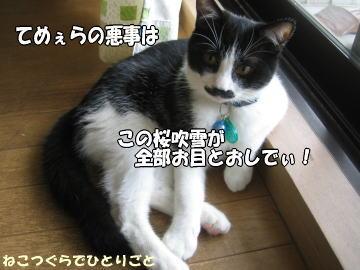 b0041182_918813.jpg