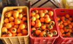 干し柿作り、やっと終わりました。_d0026905_20454116.jpg