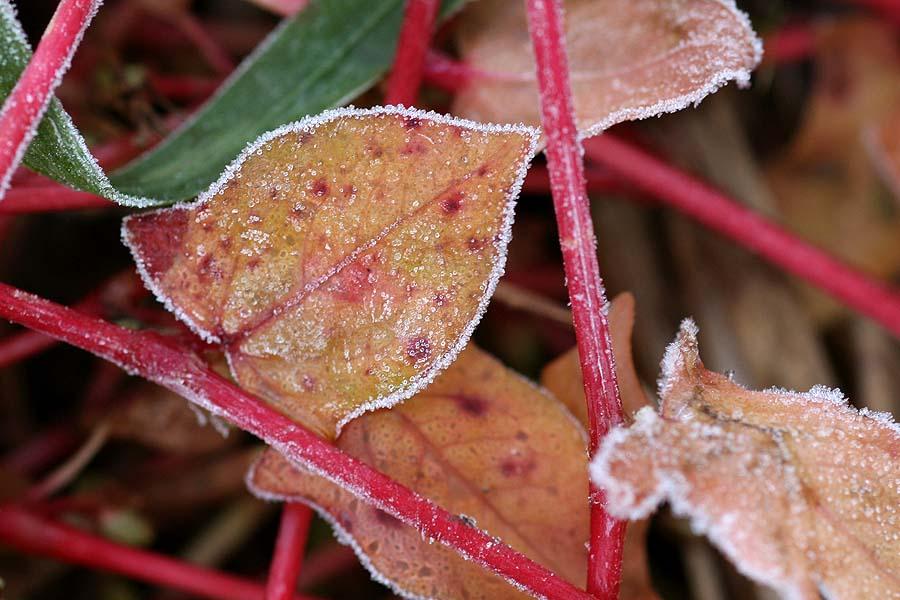 霜がおりました・・・_e0025661_6252985.jpg