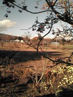 秋の芸術祭_c0038078_202056100.jpg