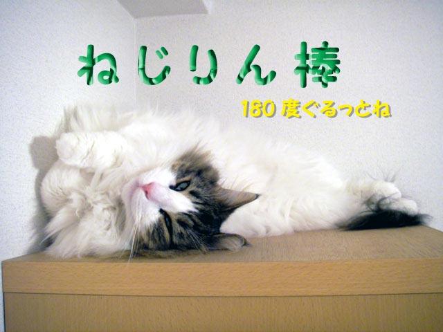 b0066487_20105530.jpg
