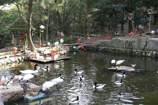 野鳥の森_b0024758_237242.jpg