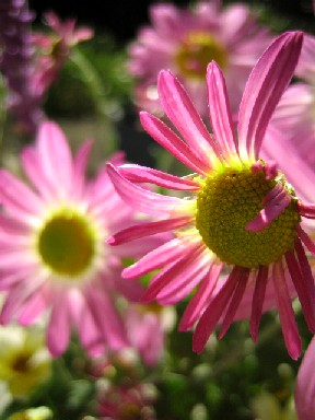 ピンク ピンク_e0003966_23191326.jpg