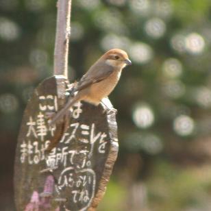 見つけて、見つけて『冬の鳥』_b0049307_1813465.jpg