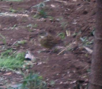 見つけて、見つけて『冬の鳥』_b0049307_1828733.jpg