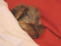バブー、ついに人間様のベッドまで奪う_c0024345_894531.jpg