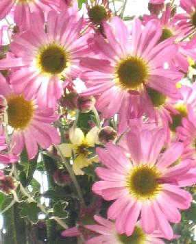 ピンク ピンク_e0003966_15183598.jpg