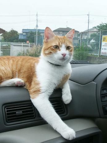 猫バトン_b0019333_20295686.jpg