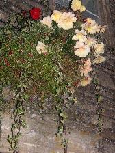 イギリス紀行 その9 2日目の夜♪《結婚式前夜祭ディナー》_b0051666_1521482.jpg