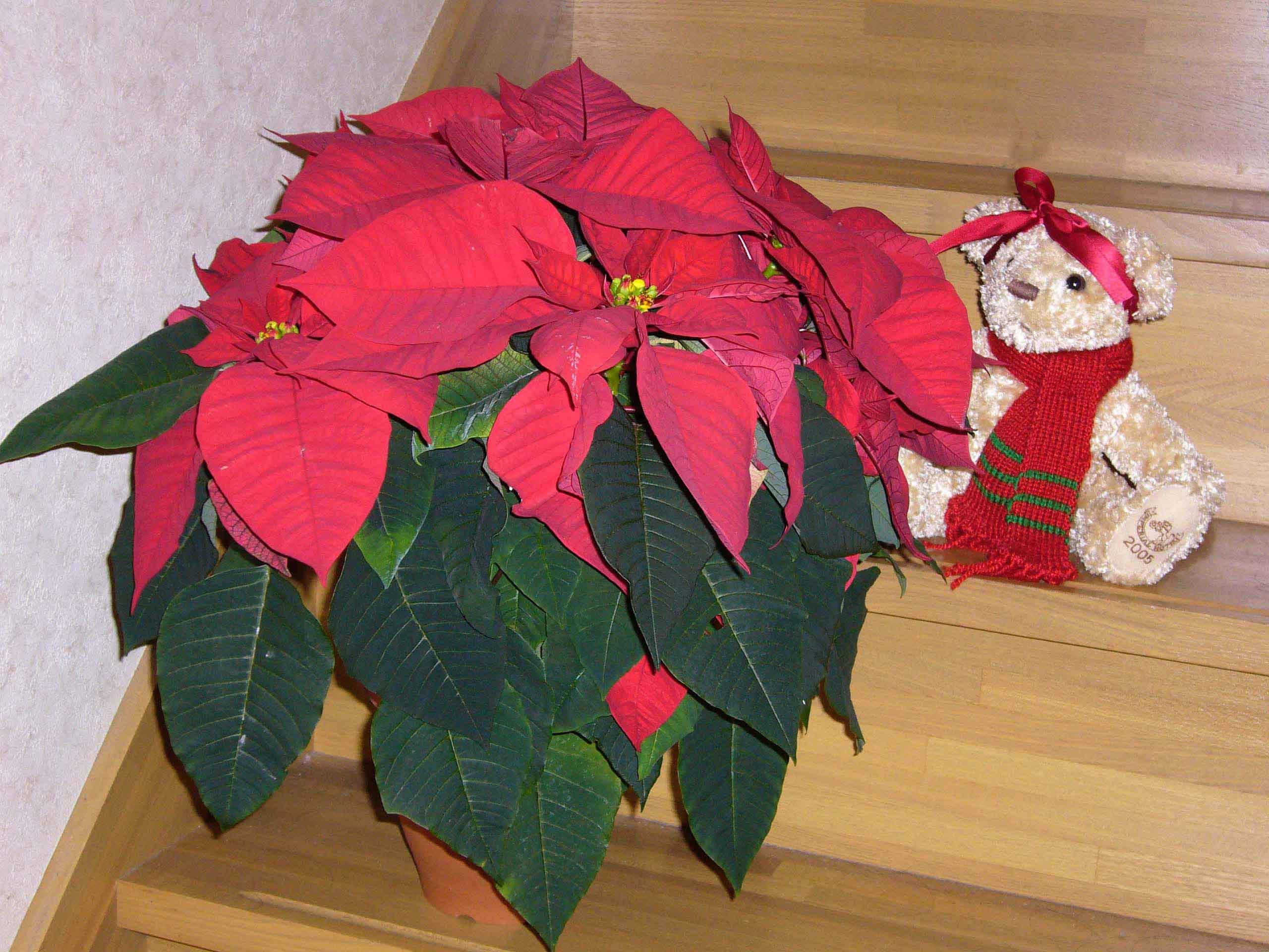 クリスマスの準備_a0053662_23341159.jpg