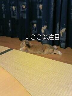 c0037575_19541035.jpg