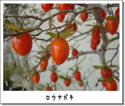 b0066985_16283224.jpg