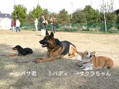 a0034988_20113243.jpg