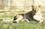 ぶどう畑、いいえ動物園です。_d0026905_2115314.jpg