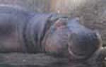 ぶどう畑、いいえ動物園です。_d0026905_21241781.jpg
