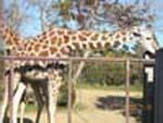 ぶどう畑、いいえ動物園です。_d0026905_2124315.jpg