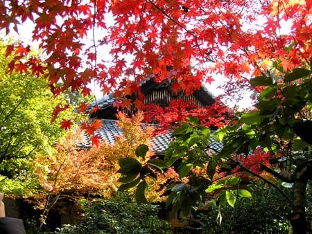 大徳寺 高桐院1_e0048413_23151320.jpg