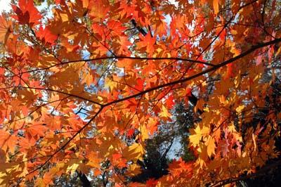 西郷村の山荘、秋の終わり_b0038919_170519.jpg