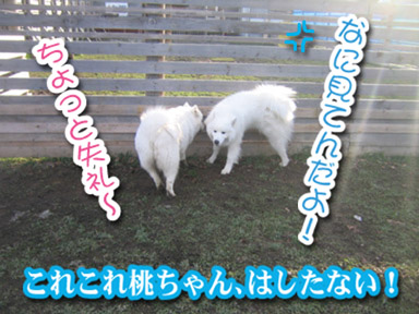a0044521_1125041.jpg