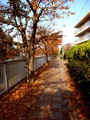 ゆったりと、余裕の散歩がしたいです。_e0046128_16324432.jpg