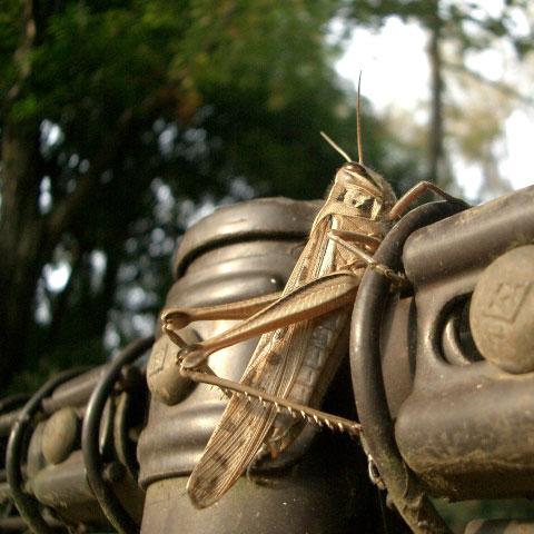 野川公園自然観察園の柵と虫(2)_e0064461_2345243.jpg