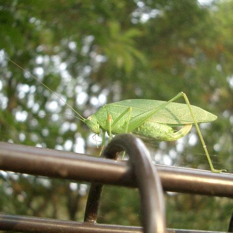 野川公園自然観察園の柵と虫(2)_e0064461_2346846.jpg