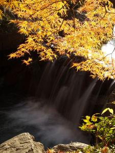上尾丸山公園_a0027275_18563112.jpg