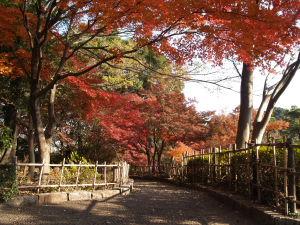 上尾丸山公園_a0027275_1856441.jpg