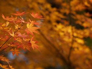 上尾丸山公園_a0027275_18565434.jpg