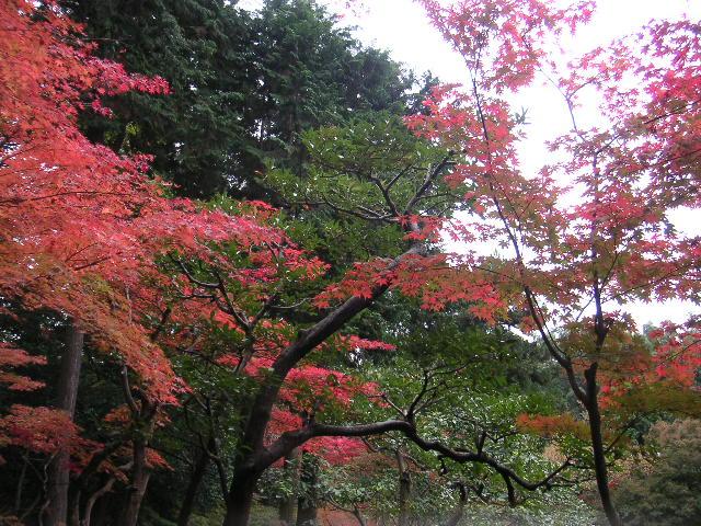 【北区】六甲山の紅葉_d0068879_10494650.jpg