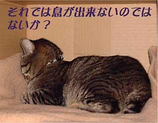 a0038698_2512536.jpg