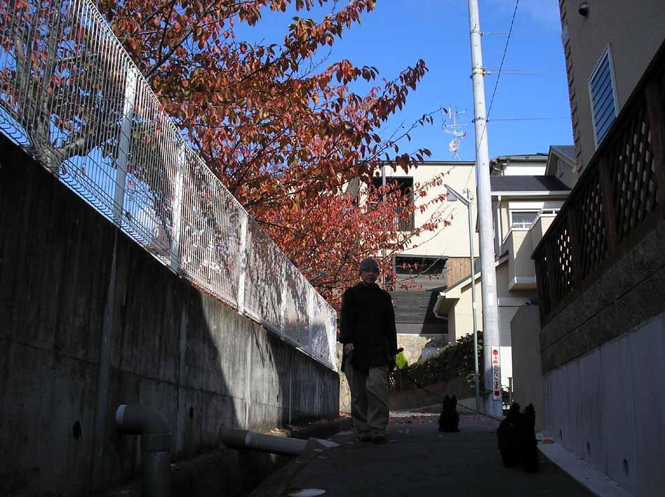 紅葉・京都でなくとも_e0055098_112125.jpg