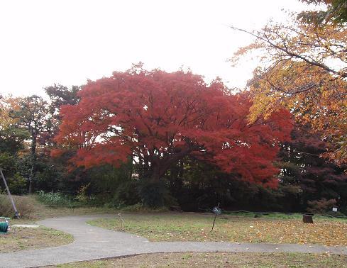 ~深まる秋~_b0049307_19214840.jpg