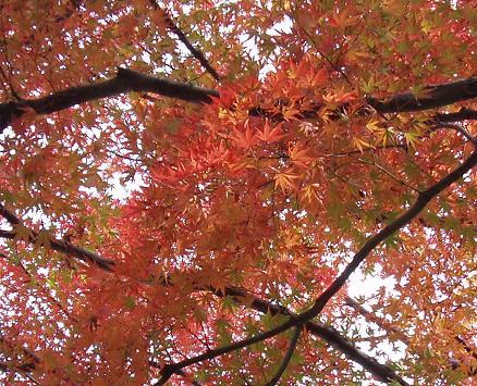 ~深まる秋~_b0049307_1971238.jpg
