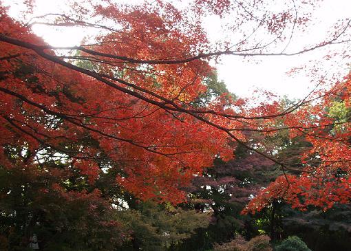 ~深まる秋~_b0049307_1973011.jpg