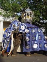 象の王_f0006713_055685.jpg