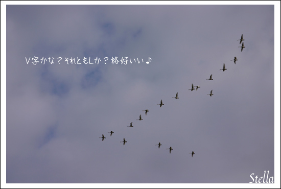 d0015026_16245415.jpg